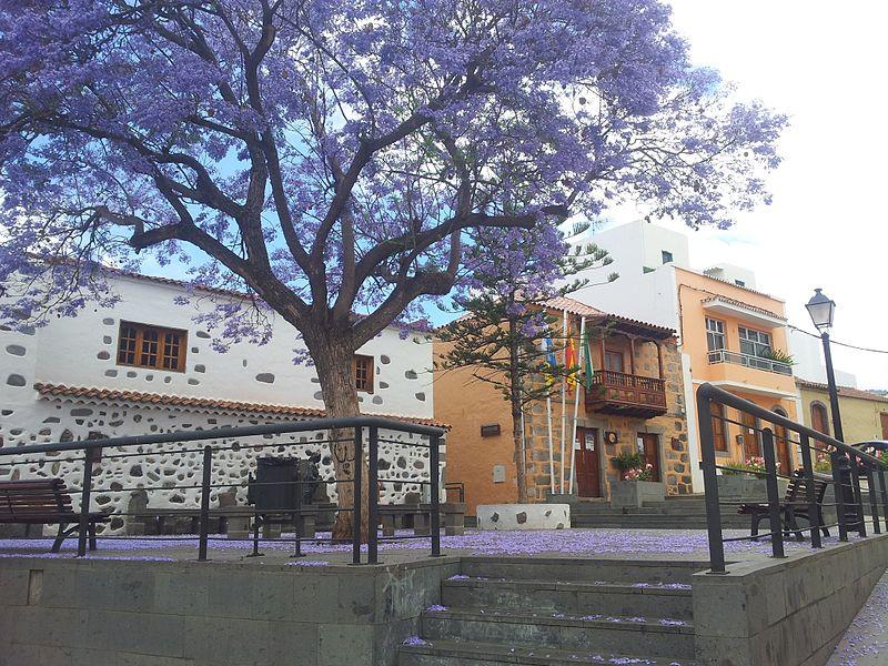 Plaza de El Pilar, Ayuntamiento, Jacaranda en Flor