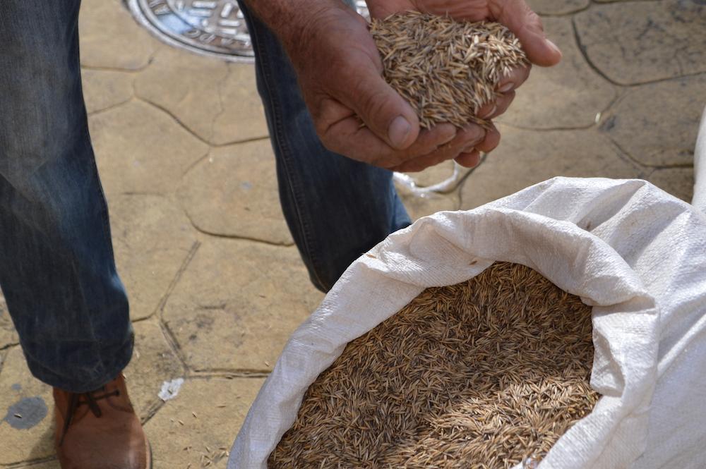Primer plano de manos y semillas