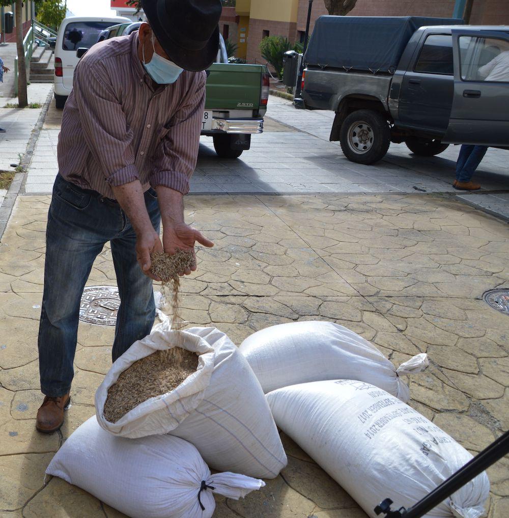 Agricultor muestra las semillas