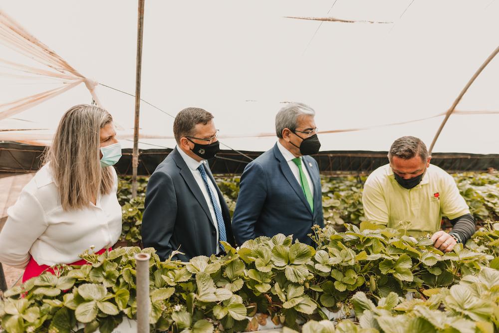 Concejala de Desarrollo Local, Alcalde y Consejero visitan una finca de fresas del municipio
