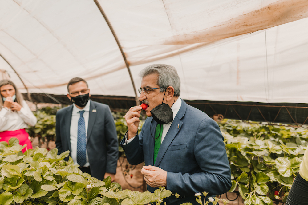 Román Rodríguez prueba las fresas de Valsequillo