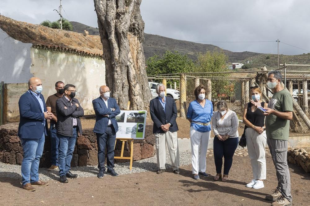 """Featured image for """"El Cabildo y el Ayuntamiento de Valsequillo actúan para conservar el histórico Drago de Luis Verde"""""""